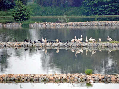 'Lake rejuvenation plan flawed, breeds vectors'