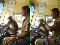 Karnataka: Bus driver allows monkey to get behind wheels