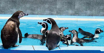 Mumbai Mirror Exposé: The big lie behind the penguins at the Byculla zoo