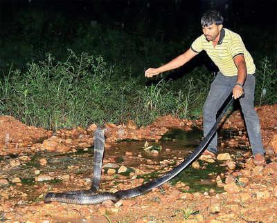 Police thrash snake-rescuer; volunteers on flash protest
