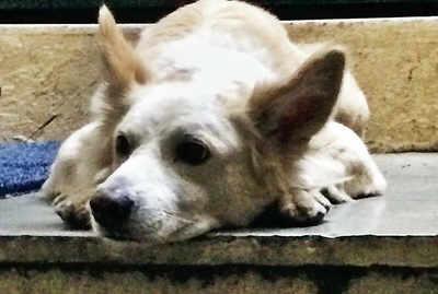 Court order sets a positive precedent for animal activists