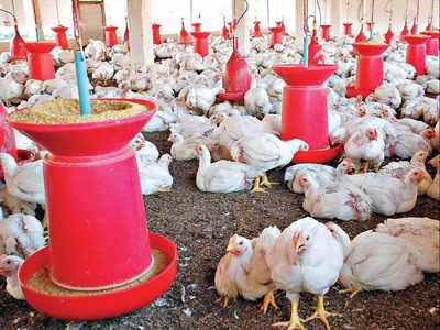 Rapid response teams set up to keep a tab on bird flu