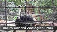 Visakhapatnam: Visitors throng Indira Gandhi Zoological Park with Covid-19 norms in place