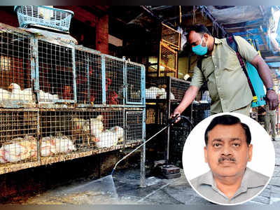 Bird flu: Blast from the past