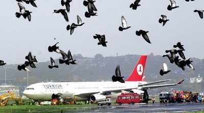 Bengaluru: BIAL plans to conduct an ornithological study