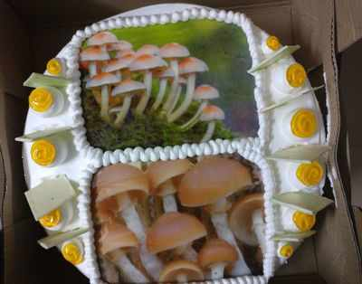 Gujarat Assembly Election 2017 Results: After Alpesh Thakore's 'mushroom' jibe, BJP leader Tejinder Bagga cuts mushroom photo-cake to celebrate party's victory