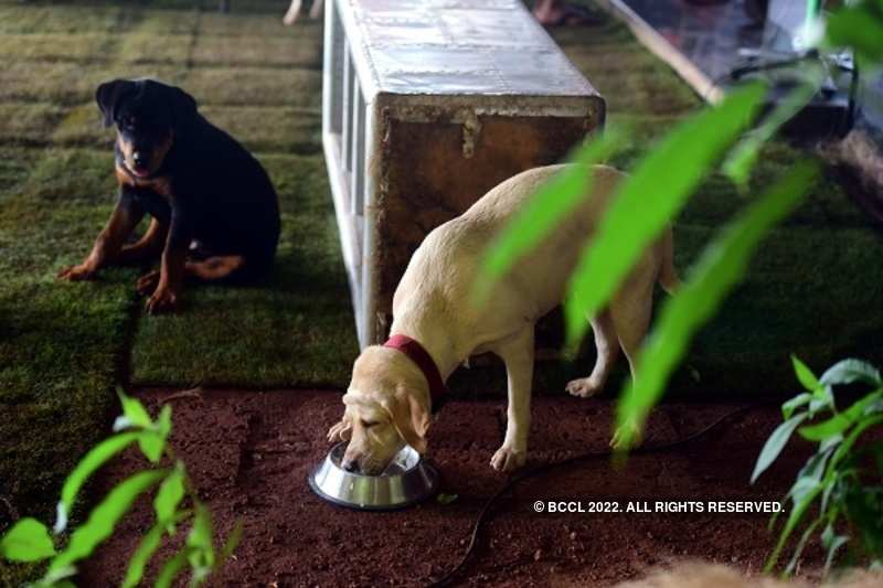 Doggies woof at Tala getaway