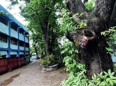 Metro to relocate trees to AIR staff quarters