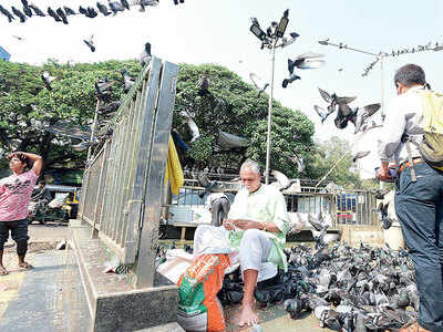 Khar residents blame pigeons for asthma, TB; Jeweller Chandanmal claims 400 locals in favour of feeding birds