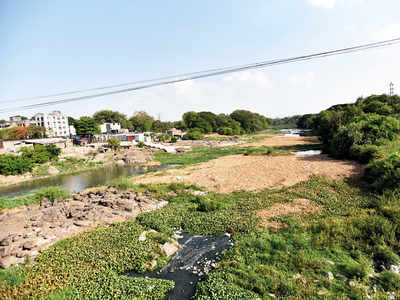 Water hyacinth breeds vectors at Vishrantwadi