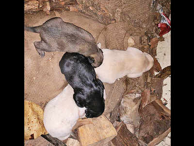 Newborn pups freed from unstable rock pile in a joint effort