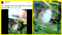 This Wisconsin family was shocked to see what lay inside their salad