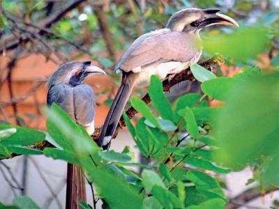 Hornbill haven