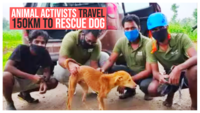 Animal activists travel 150km to rescue dog stuck in bore well
