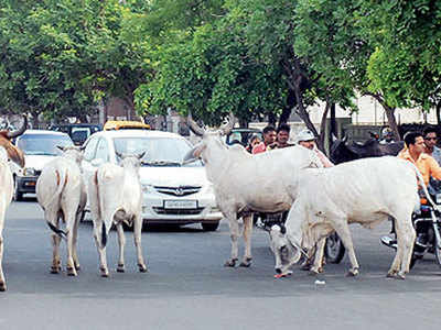 We impounded stray cattle, removed encroachment on roads: AMC to HC