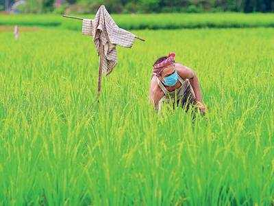 Rs 1.63 lakh cr aid, 3 big reforms for agri sector