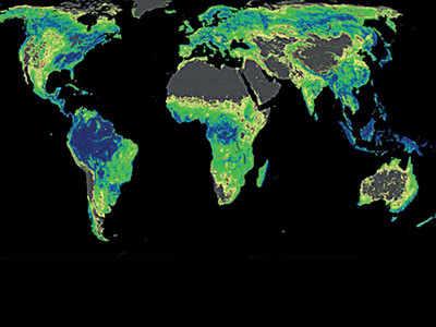 More trees key to saving climate: Study