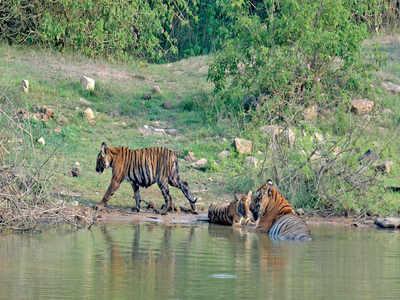 Kerala, Karnataka should develop Bandipur bypass