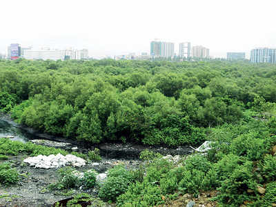 Mumbai-Vadodara Expressway to eat into 1001 mangroves