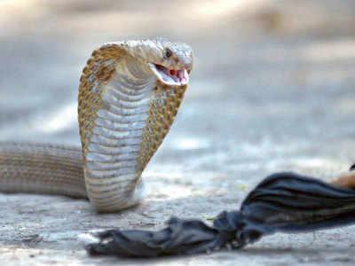 'Make snake bite drugs free'