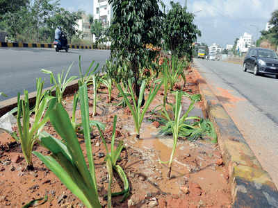 BBMP wants citizens to develop green thumbs