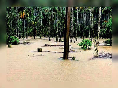 Kerala floods: Over 45K ha of paddy, spices and crops hit