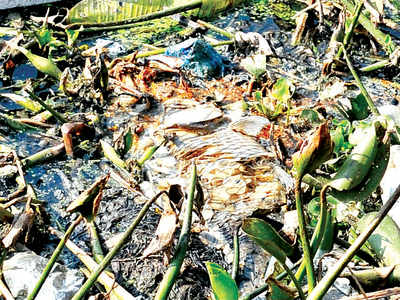 The stink of death in Bellandur Lake