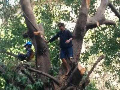 Mumbai: Man climbs a tree to protest metro 3 plan to cut it