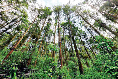 Most intact forest landscapes lie outside protected areas: ISRO