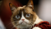 Internet sensation, 'Grumpy Cat' passes away at age seven