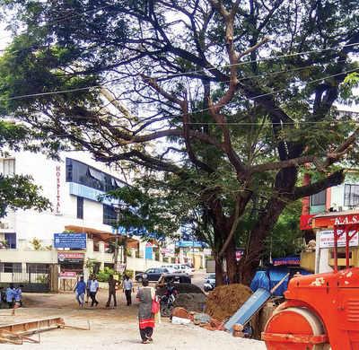 Karnataka: A green battle to save a rain tree
