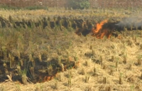 Toxic air heads Delhi's way as Punjab farmers continue burning stubble