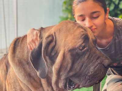 Alia shares an adorable picture with Ranbir's dog