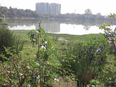 Siddapura lake in midst of a 'corporator battle'