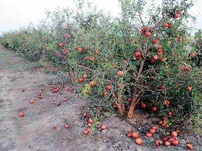 Farm loss due to climate change a reality: Study