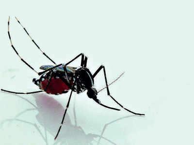 Coronavirus panic relieves Ahmedabad of mosquito menace