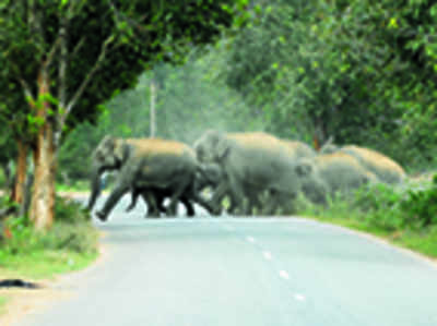 Jumbos in quarry state of affairs