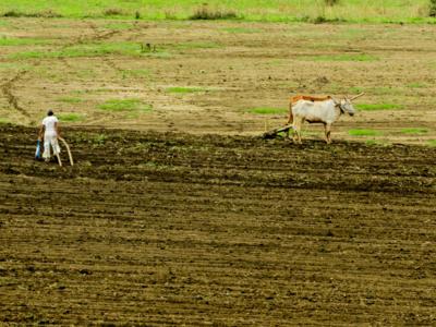300 Maharashtra farmers killed selves in November while parties jostled for power