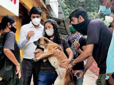 War against rabies