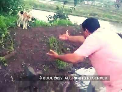 Two puppies rescued by Pune activist