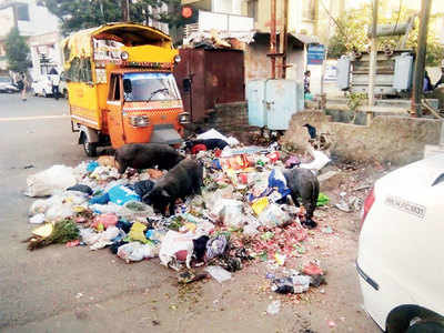 PCMC can't handle its strays humanely
