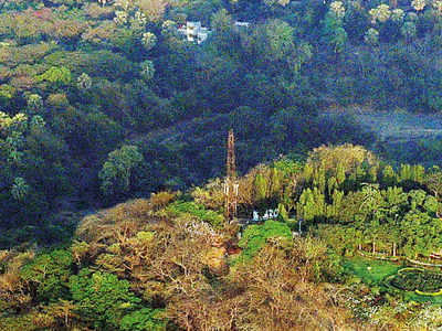 154 trees to be cut for gas pipeline through Sanjay Gandhi National Park