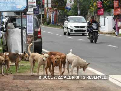 90 stray dogs killed in Buldhana, police recovers carcasses from forest area