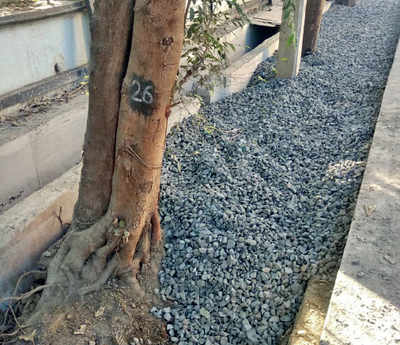 Despite BMC order, trees not given space to breathe