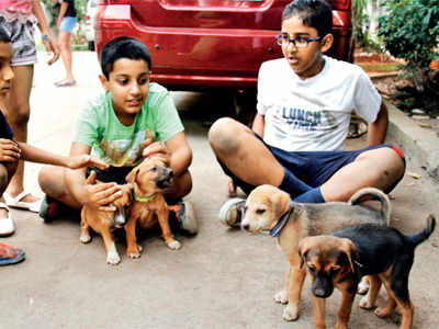 7 pups displaced by unidentified people, volunteers reunite them with mother