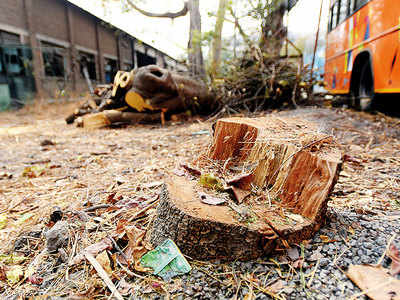 PMC set to drag MSRTC to court over axing of 27 fully grown trees on its premises