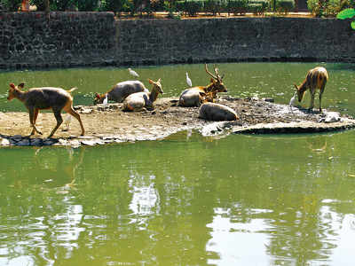 Forest dept to get 18 water tankers to tend to wildlife