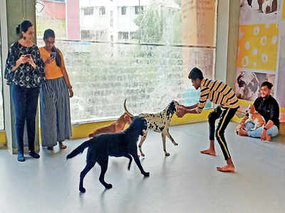 'Inhuman, inconsiderate and insensitive' Animal lovers lash out at petting centre in Vastrapur, ask owners to stop exploitation of canines