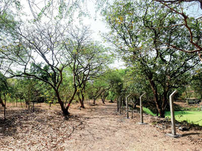 Mahim Nature Park: CM Devendra Fadnavis replies, but questions remain