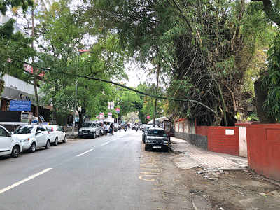 Trees breaking down on roads pose risk